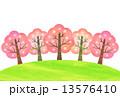 春の桜並木 13576410