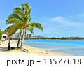 ハワイの休日 13577618