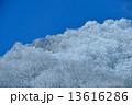 冬霧氷雪景色イメージ 13616286