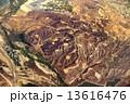 ロサンゼルス近郊の航空写真 13616476