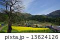 飯山市 信州 菜の花の写真 13624126