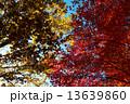 紅葉 13639860