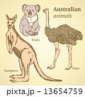 ビンテージ オーストラリア スケッチのイラスト 13654759