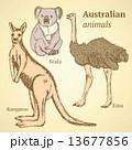 ビンテージ オーストラリア スケッチのイラスト 13677856