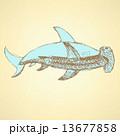 絵を描く 手 サカナのイラスト 13677858
