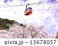 須磨浦公園 ロープウェイ 桜の写真 13678057