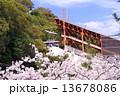 須磨浦公園 ロープウェイ 桜の写真 13678086