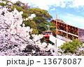 須磨浦公園 ロープウェイ 桜の写真 13678087