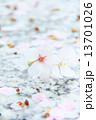 桜 13701026