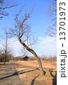 馬見丘陵公園 公園 冬の写真 13701973