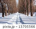 ポプラ 雪道 並木の写真 13705566