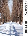 ポプラ 雪道 並木の写真 13705567
