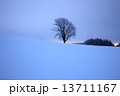 哲学の木 13711167