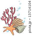 貝殻 ひとで ヒトデのイラスト 13714104