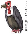 ハゲワシ 禿鷲 鳥のイラスト 13714909