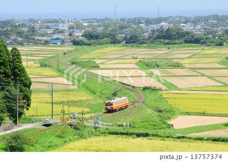 稲刈りが始まった晩夏のいすみ鉄道を走る国鉄型気動車 13757374