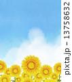 向日葵 13758632