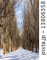 ポプラ並木 雪道 冬の写真 13806358