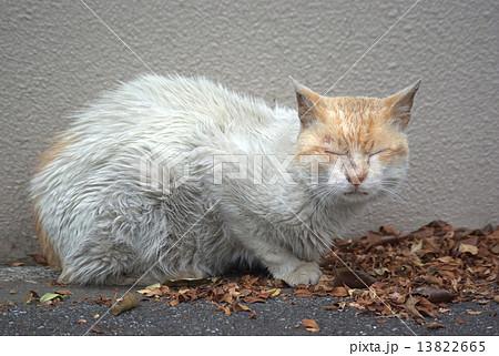 老猫の病気? よだれ、鼻水、毛並みのよごれ、痩 …