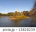 雪吊り 千葉公園 綿打池の写真 13828239