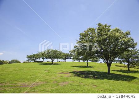 公園 13844045