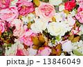 バラ 爽やかな 新鮮の写真 13846049