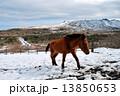 活火山 三原山 馬の写真 13850653