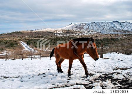 雪の三原山と馬 13850653