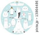 北国の白い生き物  北海道 13864486