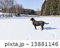 ウィンター ウインター 冬の写真 13881146
