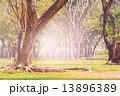 陸 地面 地の写真 13896389