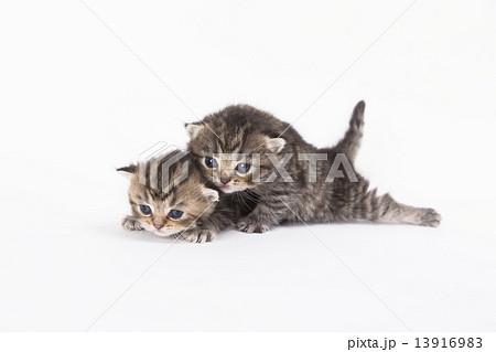 寄り添う子猫 13916983