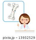 医師 老化 骨密度のイラスト 13932529