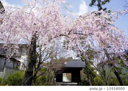 仙台市、輪王寺の桜 13938000