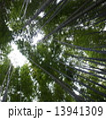 鎌倉の竹林 13941309