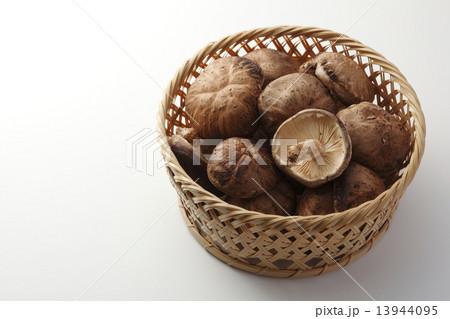 生椎茸 椎茸の写真素材 [13944095] - PIXTA