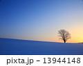 雪景色 木 夜明けの写真 13944148