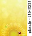 向日葵 13945238
