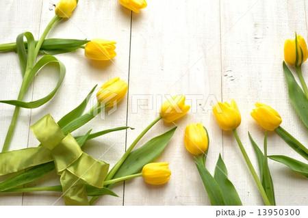 黄色いチューリップとイエローグリーンリボン 13950300