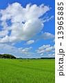 夏の青空と一面の田園風景 13965885