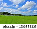 夏の青空と一面の田園風景 13965886