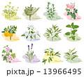 アロマ 植物 いろいろ 13966495