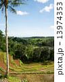 椰子の木 ジャティルイ 棚田の写真 13974353