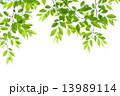 新緑 13989114