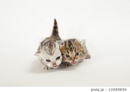 親を捜す子猫 13989694