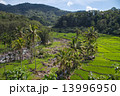 Bright green rice fields with palm trees and mountain river flow 13996950