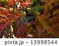 京都 東福寺の紅葉 13998544
