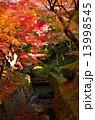 京都 東福寺の紅葉 13998545
