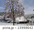 雪景色 柿 冬の写真 13998642