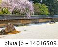 龍安寺方丈庭園、白砂 14016509